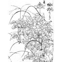 牡丹・二十日草 - 書名不明(江戸前期)