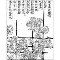 菊に籬 - 絵本通宝志(享保14年・1729年)