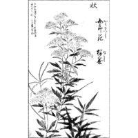 女郎花に薄 - 押絵手鑑(元文元年・1736年)