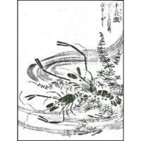手長鰕 - 絵本通宝志(享保きょうほう14年・1729年)