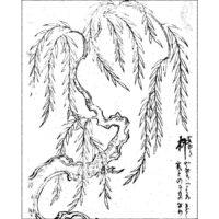 柳 - 絵本稽古帳(享保3年・1718年)