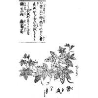 苦瓜(ゴーヤー) - 頭書増補訓蒙図彙(寛政元年・1789年)