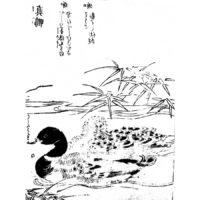 真鴨 - 絵本通宝志(享保14年・1729年)