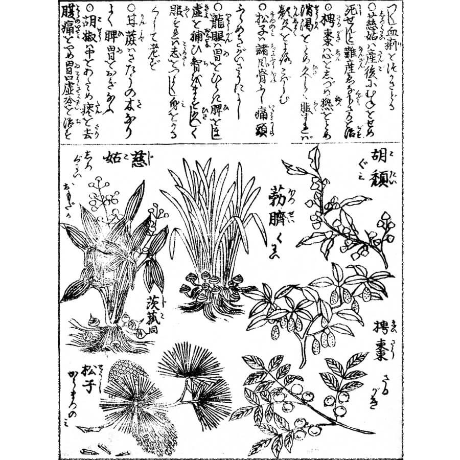 面高・沢瀉 - 頭書増補訓蒙図彙(寛政元年・1789年)