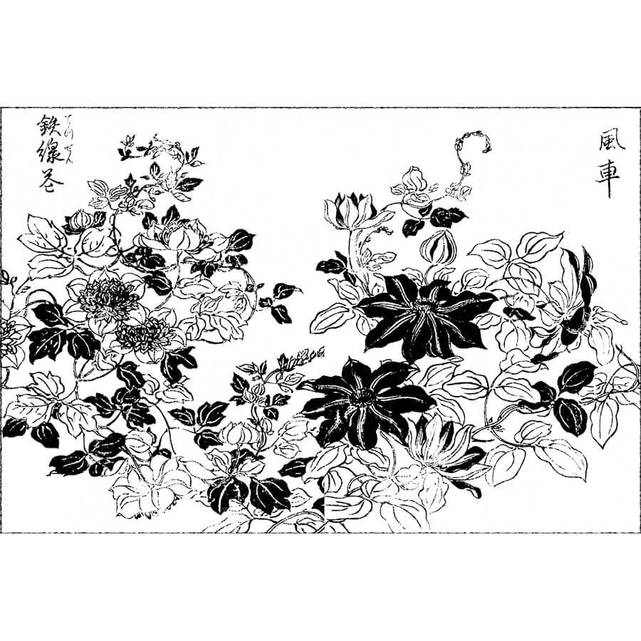 鉄線 - 画本野山草(宝暦5年・1755年)