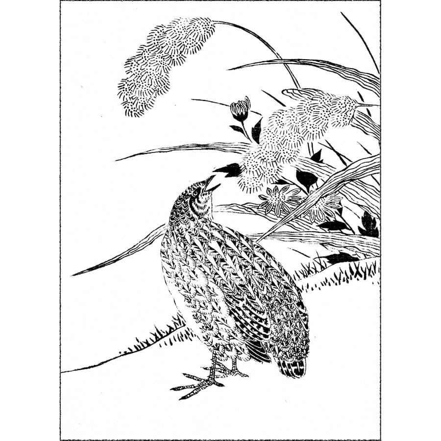 鶉・鶉斑 - 麁画便覧(享保5年・1720年)